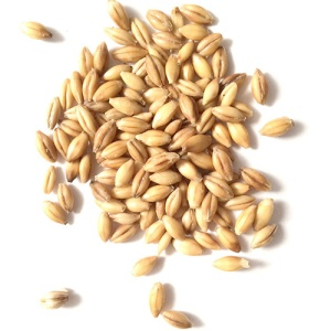 Malting-Barley