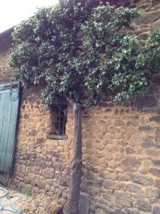 lemorton-courtyard-detail