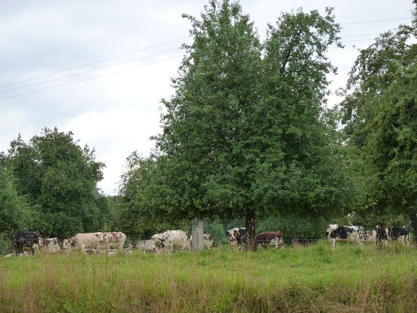 Lemorton Orchard