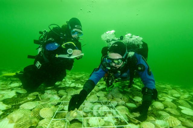 Glenmorangie DEEP oysters being laid 2018